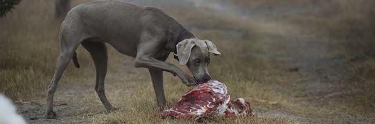 Hundefutter, Nahrungsergänzung...